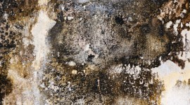 Mold Wallpaper