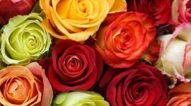 Multi Colored Bouquets Photo#1