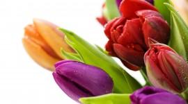 Multi Colored Bouquets Photo#2