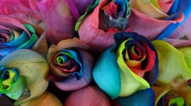 Multi Colored Bouquets Wallpaper For IPhone