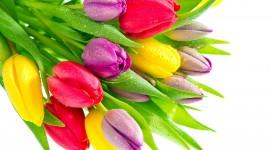 Multi Colored Bouquets Wallpaper Full HD#1