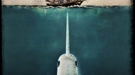 Narwhal Wallpaper For IPhone