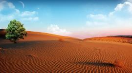 Oasis In The Desert Desktop Wallpaper Free