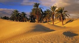Oasis In The Desert Wallpaper 1080p