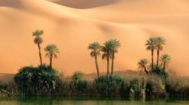 Oasis In The Desert Wallpaper Free