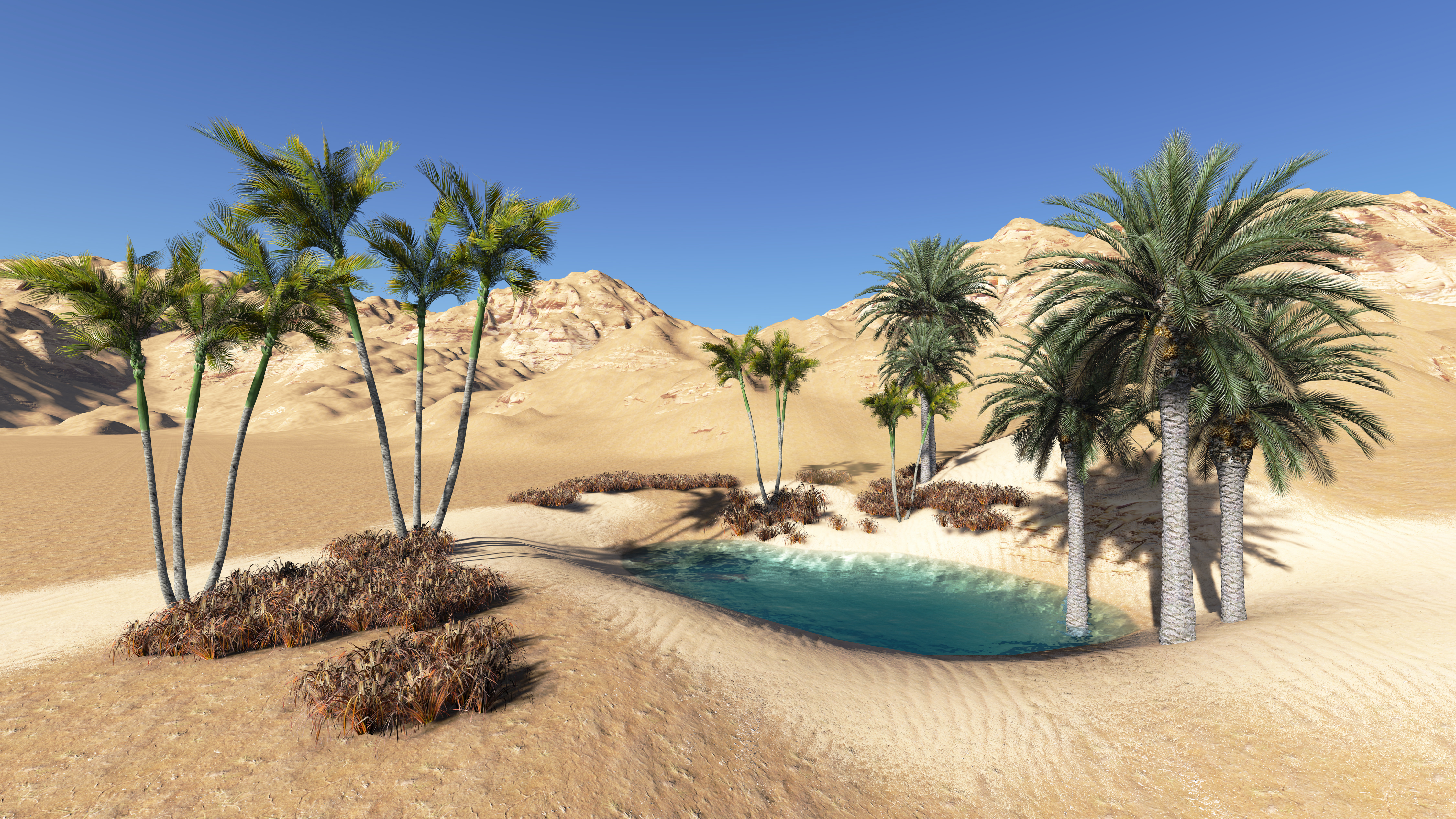 Oasis In The Desert Wallpapers High Quality Download Free