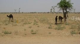 Oasis In The Desert Wallpaper High Definition