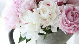 Peonies High Quality Wallpaper