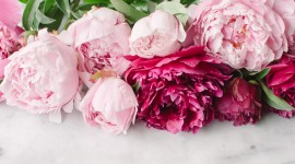 Peonies Wallpaper High Definition