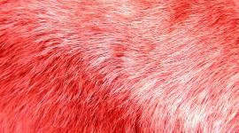 Pink Fur Best Wallpaper