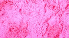 Pink Fur High Quality Wallpaper