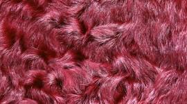 Pink Fur Wallpaper Download Free
