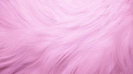 Pink Fur Wallpaper For Desktop