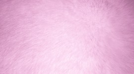 Pink Fur Wallpaper For PC