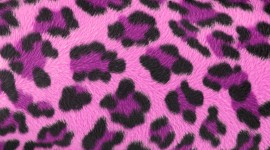 Pink Fur Wallpaper Gallery
