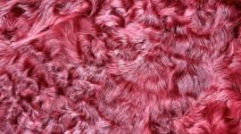 Pink Fur Wallpaper High Definition