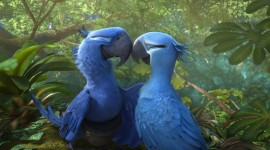Rio 2 Wallpaper Download