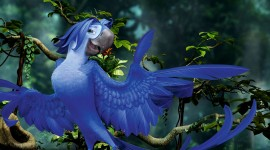 Rio 2 Wallpaper HQ