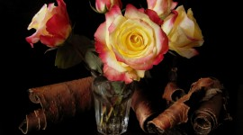 Rose In A Glass Photo Download