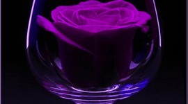 Rose In A Glass Wallpaper For IPhone