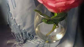 Rose In A Glass Wallpaper For IPhone#1