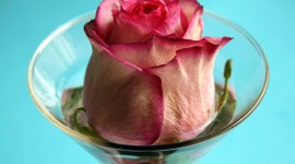 Rose In A Glass Wallpaper For PC