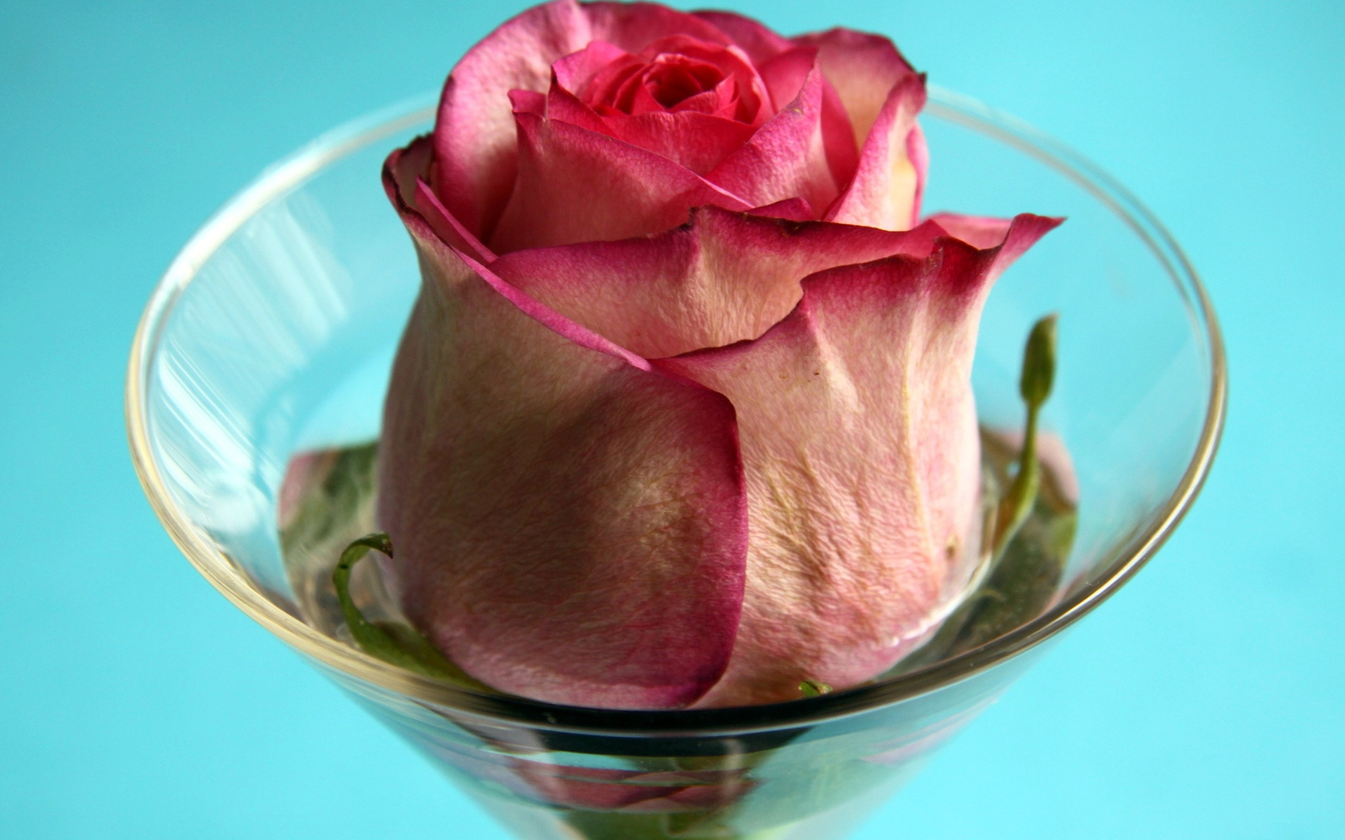 Rose In A Glass Wallpapers High Quality