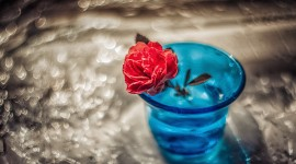 Rose In A Glass Wallpaper Gallery