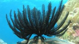Sea Lily Photo