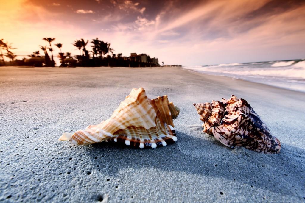 Seashells On The Seashore wallpapers HD