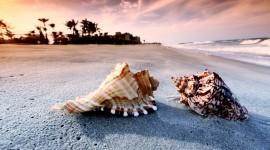 Seashells On The Seashore Best Wallpaper