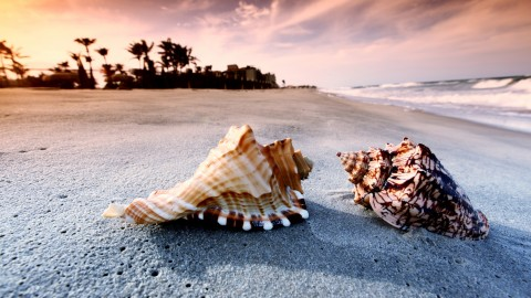 Seashells On The Seashore wallpapers high quality