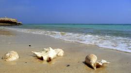 Seashells On The Seashore Wallpaper#3