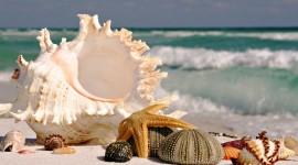 Seashells On The Seashore Photo