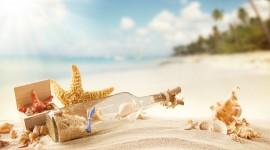 Seashells On The Seashore Photo Free#1