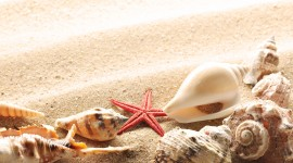 Seashells On The Seashore Photo Free#2