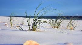 Seashells On The Seashore Photo Free#3