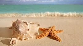 Seashells On The Seashore Photo#1