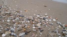 Seashells On The Seashore Photo#4