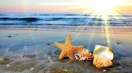 Seashells On The Seashore Wallpaper 1080p