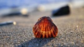 Seashells On The Seashore Wallpaper