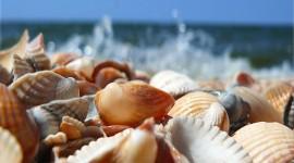 Seashells On The Seashore Wallpaper Download