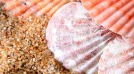 Seashells On The Seashore Wallpaper For IPhone