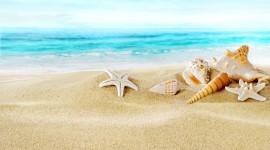 Seashells On The Seashore Wallpaper Free