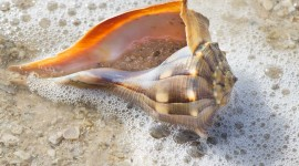 Seashells On The Seashore Wallpaper Gallery