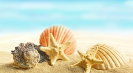 Seashells On The Seashore Wallpaper HQ