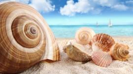 Seashells On The Seashore Wallpaper#1