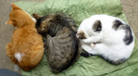Three Cats Best Wallpaper