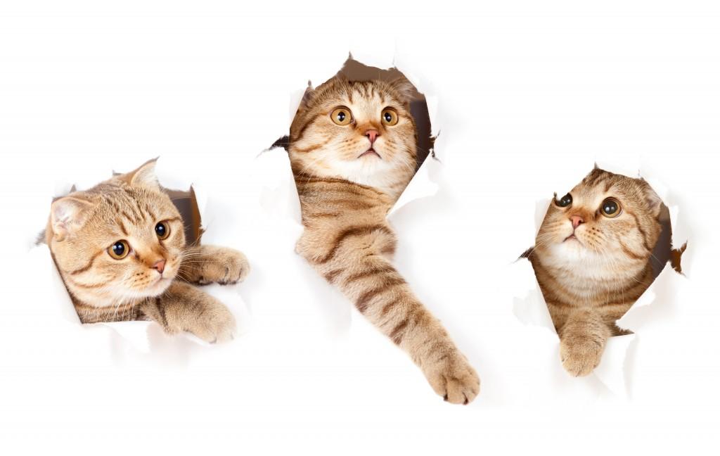 Three Cats wallpapers HD