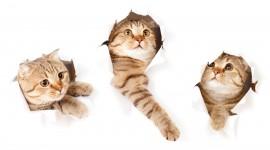 Three Cats Desktop Wallpaper